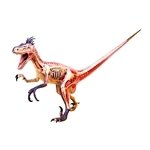 Velociraptor 3D Anatomy Model